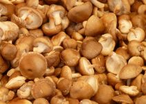 Can Dogs Eat Mushrooms? - Image 3