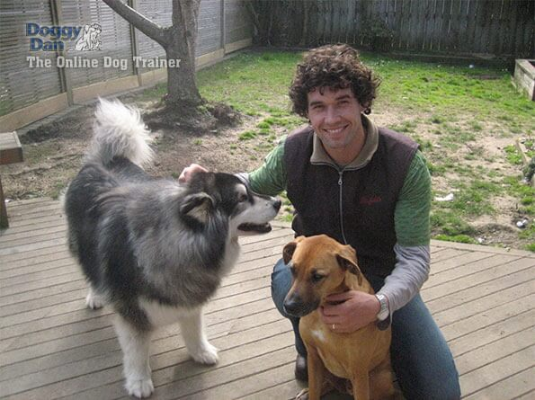 Doggy Dan's Online Dog Trainer Review - Doggy Dan