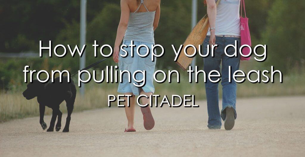 How To Stop Your Dog From Pulling On The Leash - Image 1