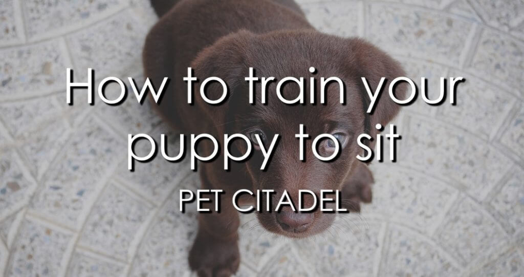 How To Train Your Puppy To Sit - Image 1