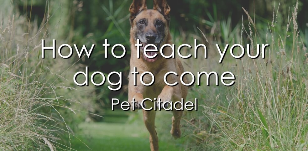How To Teach Your Dog To Come - Image 1
