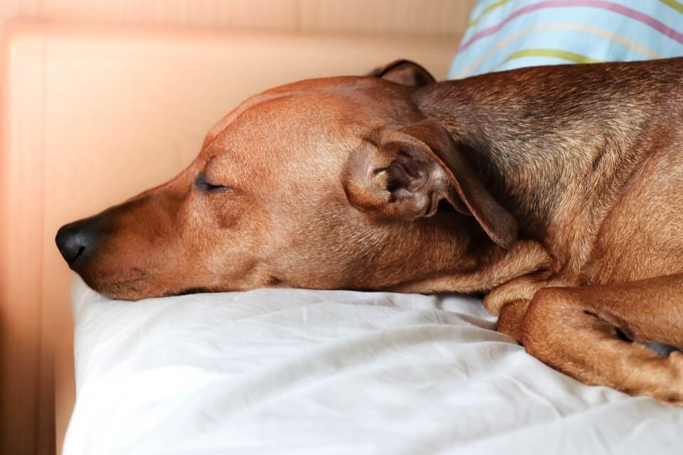 Best Dog Beds For Large Breeds - Image 1
