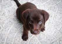 How To Train Your Puppy To Sit - Image 2