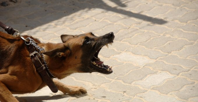 How To Stop Dog Aggression Towards Other Dogs - Image 2