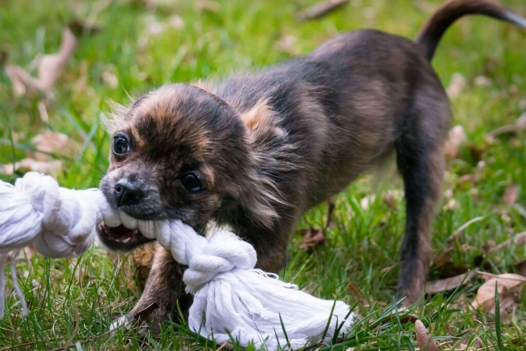 How To Stop Dog Aggression Towards Familiar People - Image 2