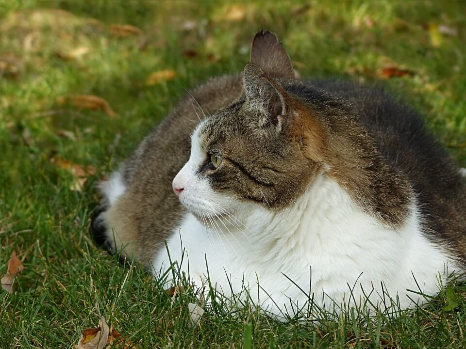 How Much Should You Feed Your Cat? - Image 2