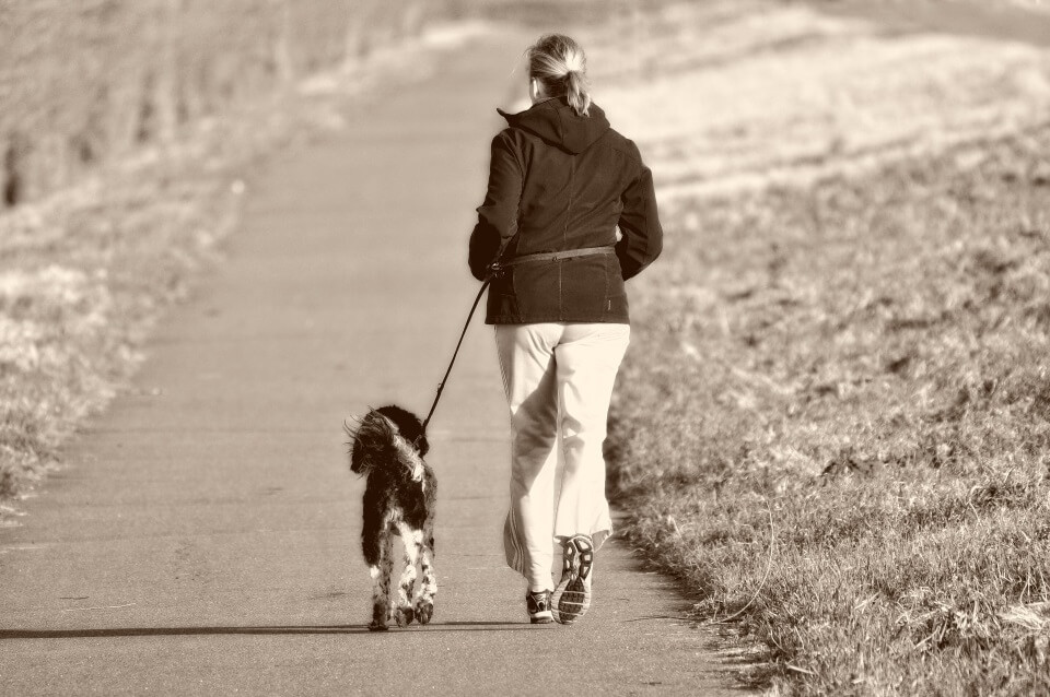 How To Stop Your Dog From Pulling On The Leash - Image 2