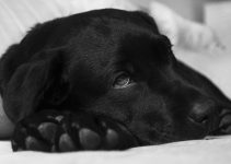 Why Your Dog's Urine Smells Like Ammonia - Image 3