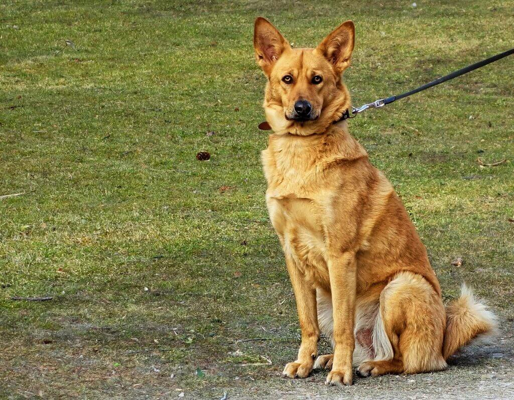 How To Get Your Dog To Stop Barking - Image 3