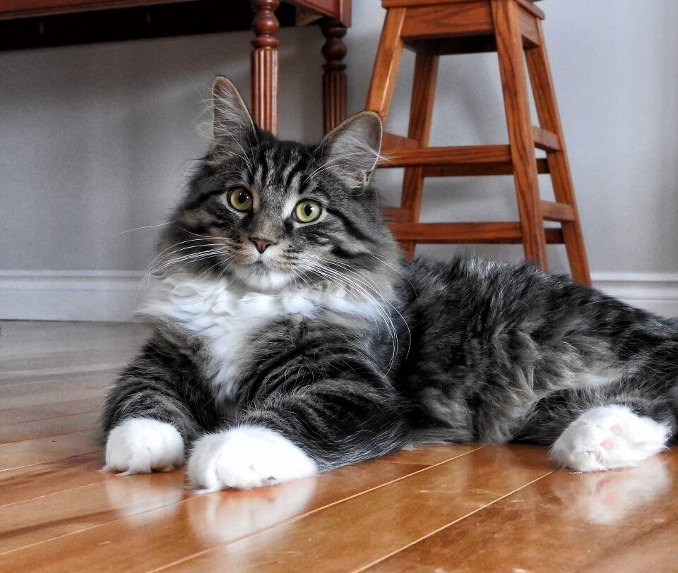 Average Lifespan Of A Cat - Image 3