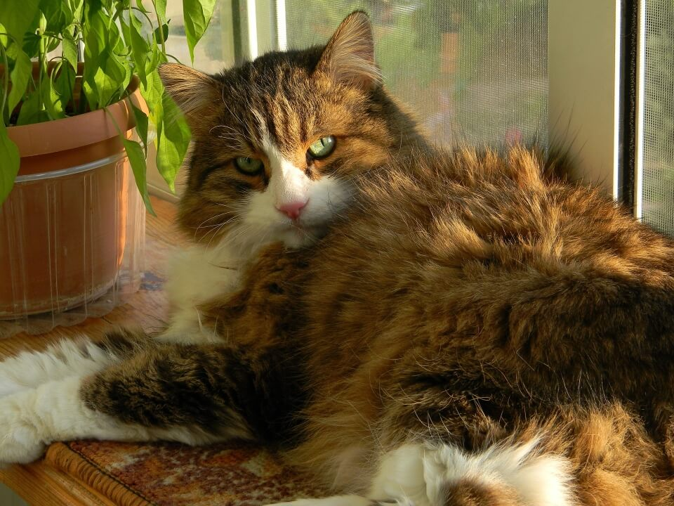 How To Stop Dog Aggression Towards Cats - Image 5