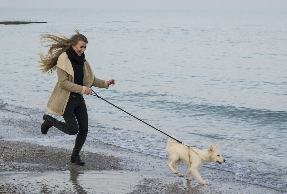 How To Get Your Dog To Stop Barking - Image 6