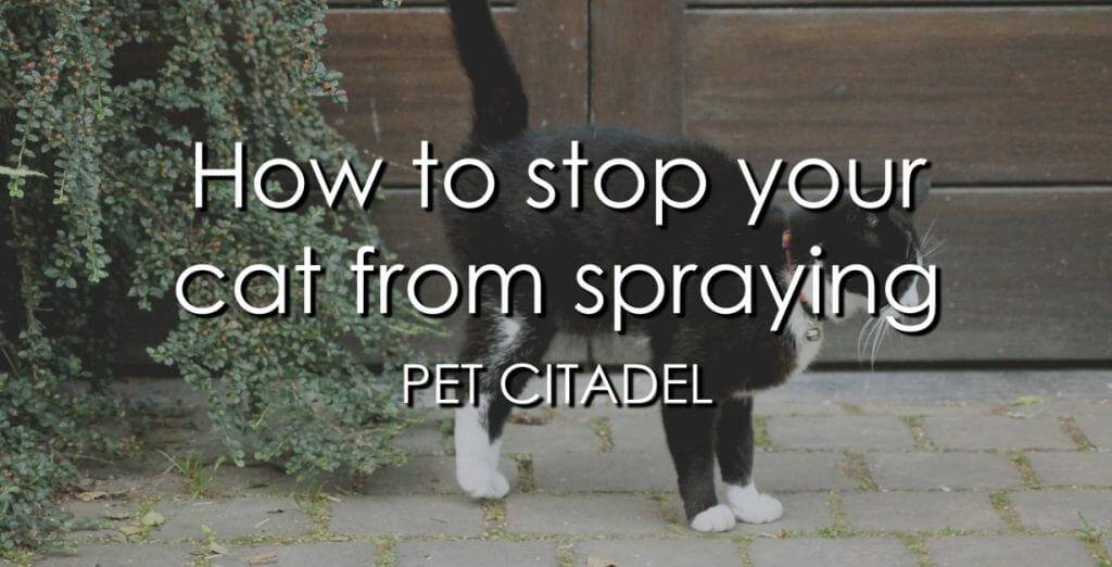 How To Stop Your Cat From Spraying - Banner Image