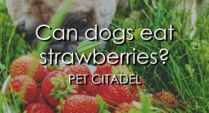 Can Dogs Eat Strawberries? - Banner Image