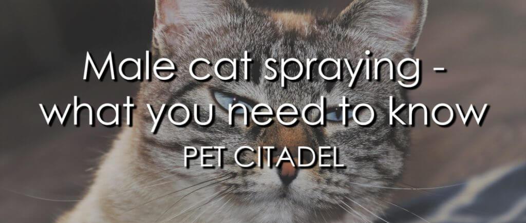 Male Cat Spraying - Image 1