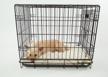 How To Crate Train A Puppy - Featured