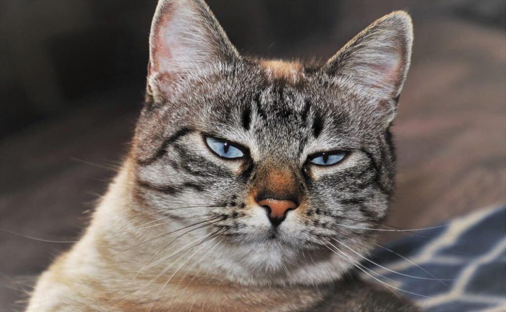 Male Cat Spraying - Image 3