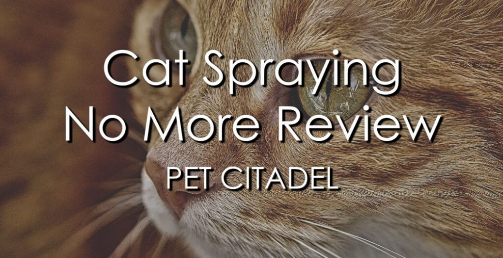 Cat Spraying No More Review - Banner Image