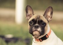 Best Bark Collars For Small Dogs - Image 2