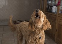 How To Stop A Dog Barking When Left Alone - Featured