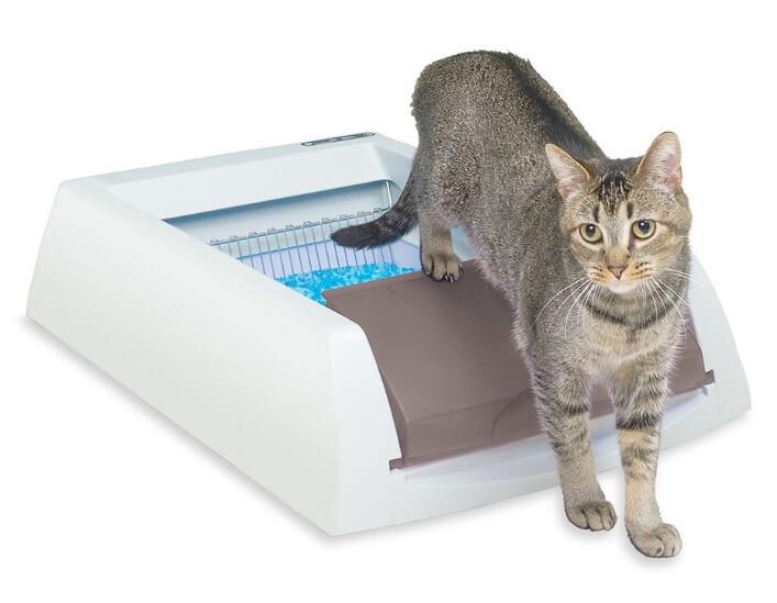 Best Self-Cleaning Litter Boxes - PetSafe ScoopFree Original