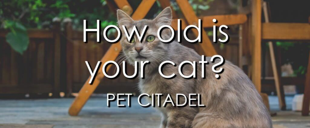 How To Tell How Old A Cat Is - Banner Image
