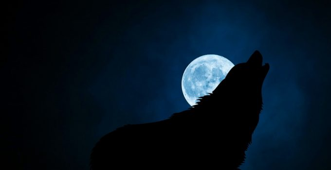 How To Stop Your Dog From Barking At Night - Featured