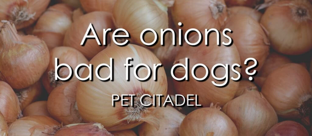 Are Onions Bad For Dogs? - Banner Image