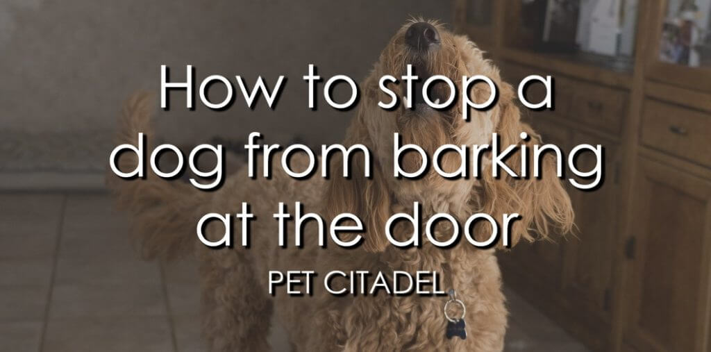 How To Stop A Dog From Barking At The Door - Banner Image