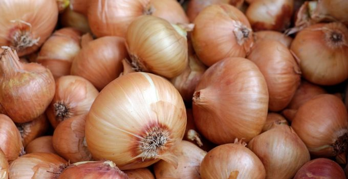 Are Onions Bad For Dogs? - Featured