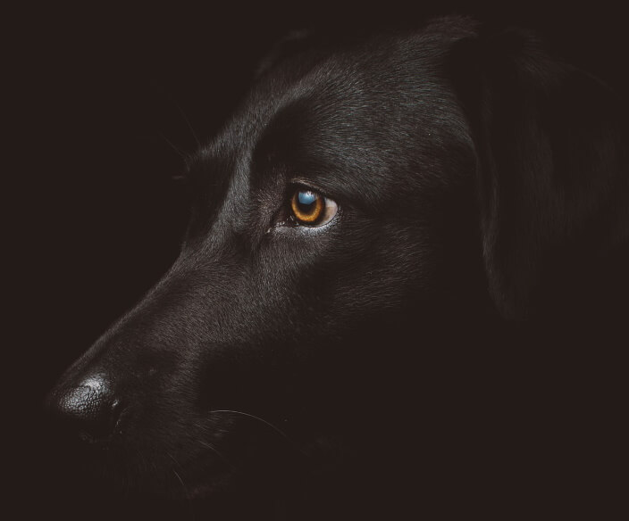 How To Stop Your Dog From Barking At Night - Image 2