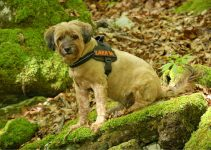 Best Dog Harnesses For Hiking - Image 2