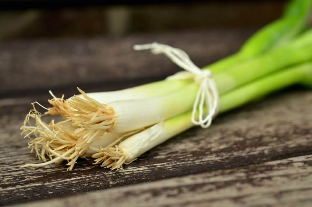 Are Onions Bad For Dogs? - Image 3
