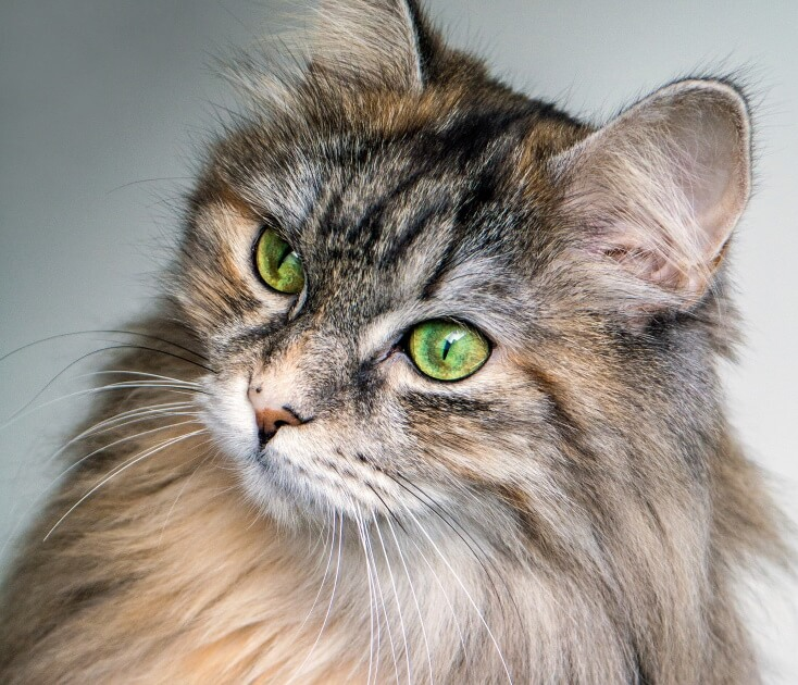 When Do Cats Stop Growing? - Image 3