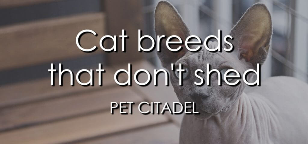 Cat Breeds That Don't Shed - Banner