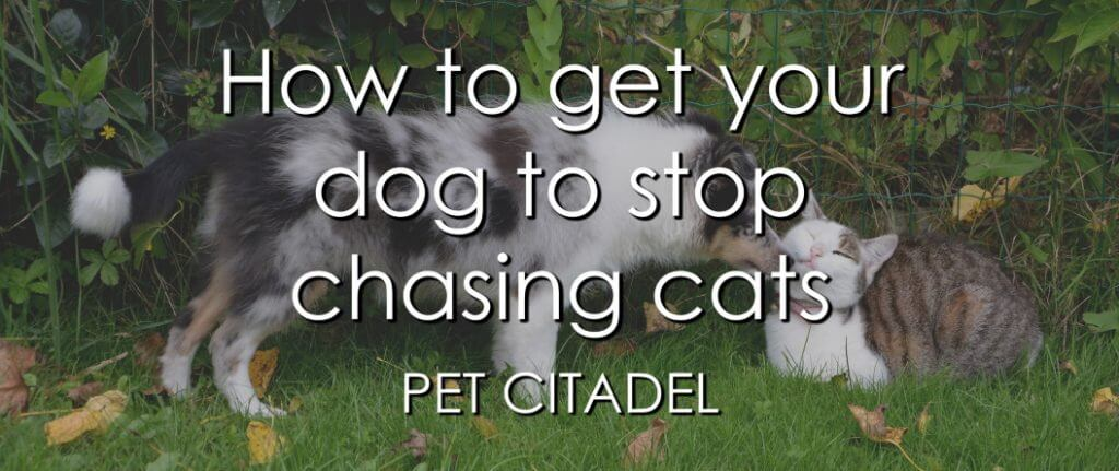 How To Stop A Dog From Chasing Cats - Banner