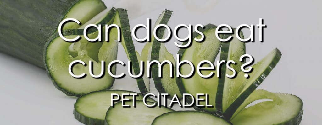 Can Dogs Eat Cucumbers? - Banner