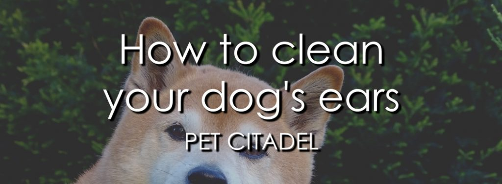 How To Clean Your Dog's Ears - Banner