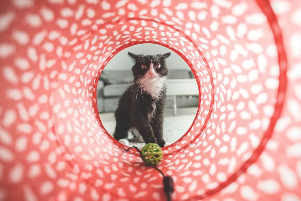 Looking at a cat through a red tube